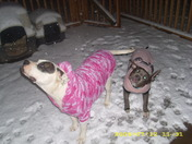 dogs out playin in the snow