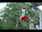 Hummingbirds in stereo..