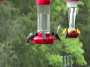 5 hummingbirds on feeder