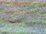 Cardinal enjoying bird seed