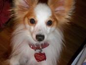 My dog Harry