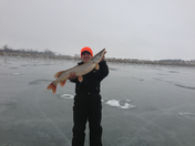 """cody grimm's master angler northern pike. 36"""" 14 pound"""