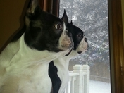 Taylor and Dooley contemplating a trip outside in the snow...:-) Do we really wa