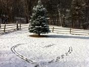 Our backyard!!!