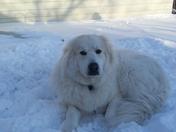 Gus loves the snow