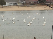 Pelicans at Chris Lake
