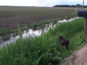 flooded ditches and cute puppy