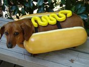 Hot Dog in a Bun!
