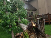 Tree damage from storm 180 & F
