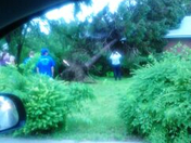 family gets awaken by massive tree.... thanks to Money1Hunnid we were SAVED