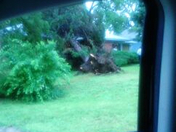 tree came out the ground