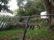 Storm damage from Benson