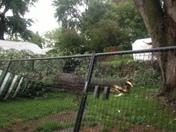 Storm damage Corby str in Benson