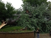 tree on house. girl was sleeping in the room where it hit.