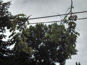 trees hanging off power lines up and down 'Q' street. (124th)