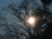 Full Moon in the treetop.