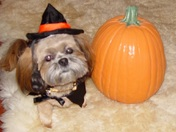 Suki loves pumpkins