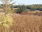 Fall is getting pretty in Glenwood, Iowa!