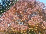 Beauty in Glenwood
