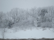 Ice and Snow covered Trees