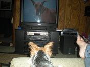 Coco watching Marmaduke