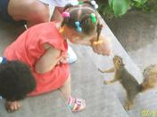 Shi and Greedy the Squirrel