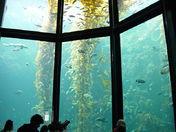 Bay Aquarium