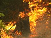 KSBW Wildfires 3