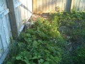 Ugly Garden 2