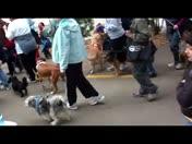 Wag n' Walk 09 video 1