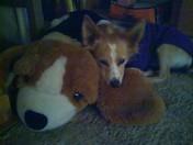 Dante and friend