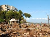 Capitola Beach driftwood