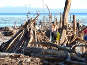 Capitola Beach driftwood used for stick forts
