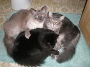 Suki, Niko, and Boo