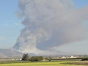 Camphora Gloria Fire