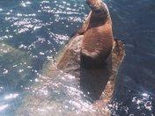 Monterey Cove See Lion on Rock with star filter kspslp.jpg