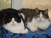Sadie & Libby