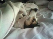 Gigi in Mommy's Bed