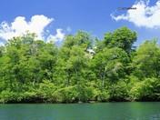 nature-summer-wallpaper.jpg