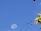 Blue Moon + 4