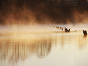 Surface Fog