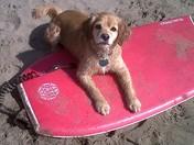Beach Day !!