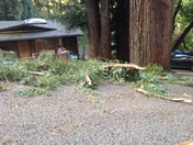 Boulder Creek Wind Damage