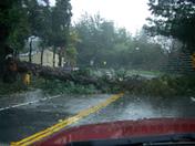 Redwood snapped @ Soquel Dr & Rio Del Mar, Aptos