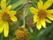 September Wild Flowers