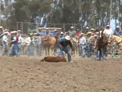 HS Rodeo 2013 calf tie down