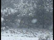 Heavy snowflakes