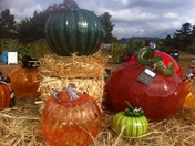Glass pumpkin patch event