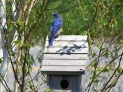 My Backyard Birds