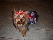 Sox Dog